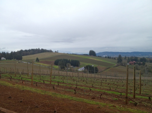 Willamette Valley wine country from my trip to Portland in March.