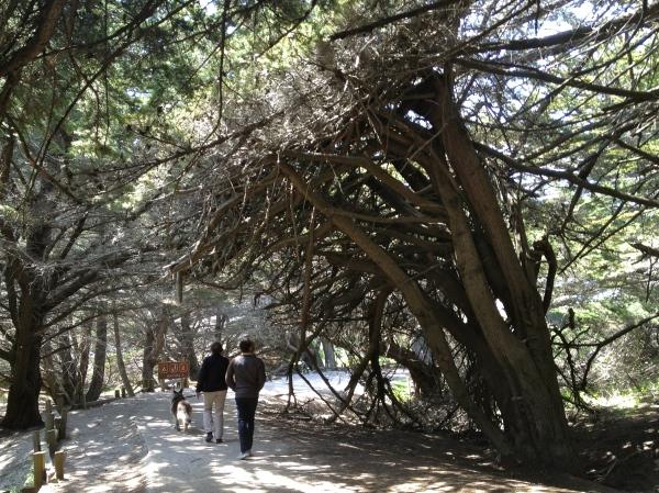 Pfeiffer Beach Park