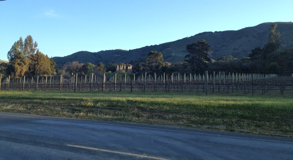 Carmel Vineyards