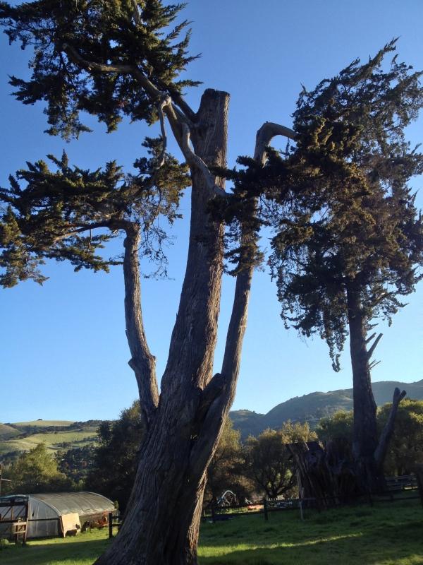 Garland Park Tree