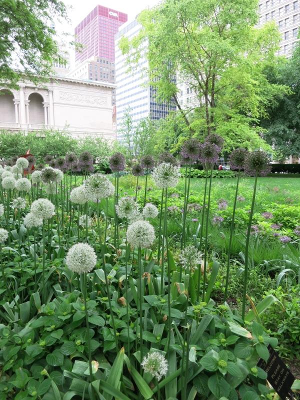 Art Institute Gardens