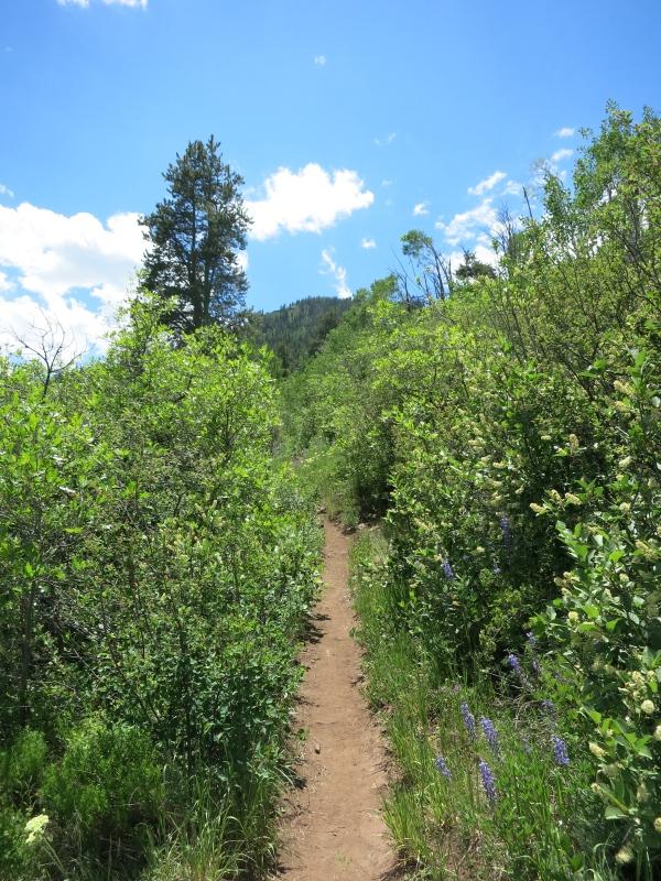 Stag Gulch Trail