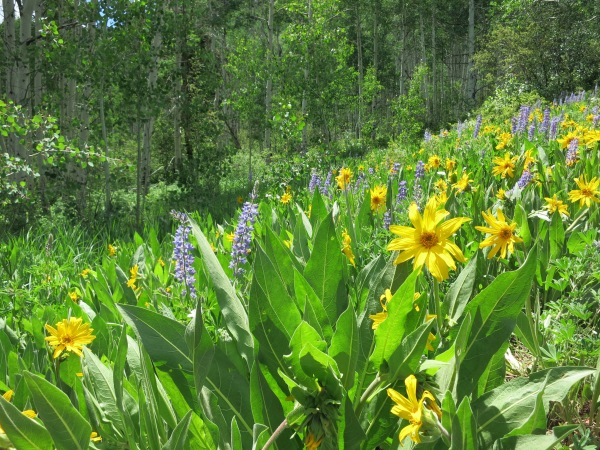 Stag Gulch Wildflower Meadow