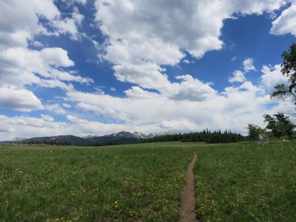 Stag Gulch Summit Meadow