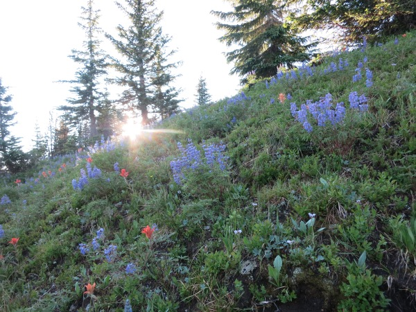 Sunrise Wildflowers