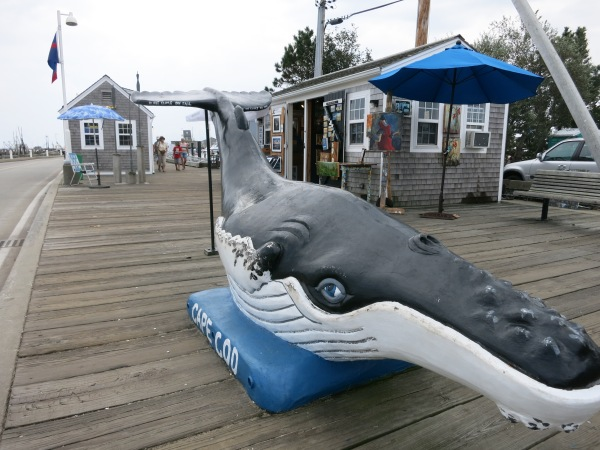 Provincetown Whale