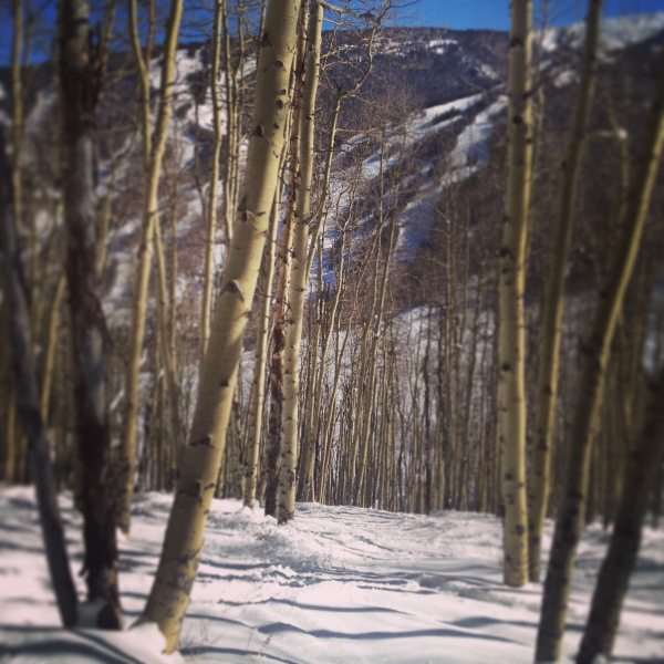 Beaver Creek Aspens