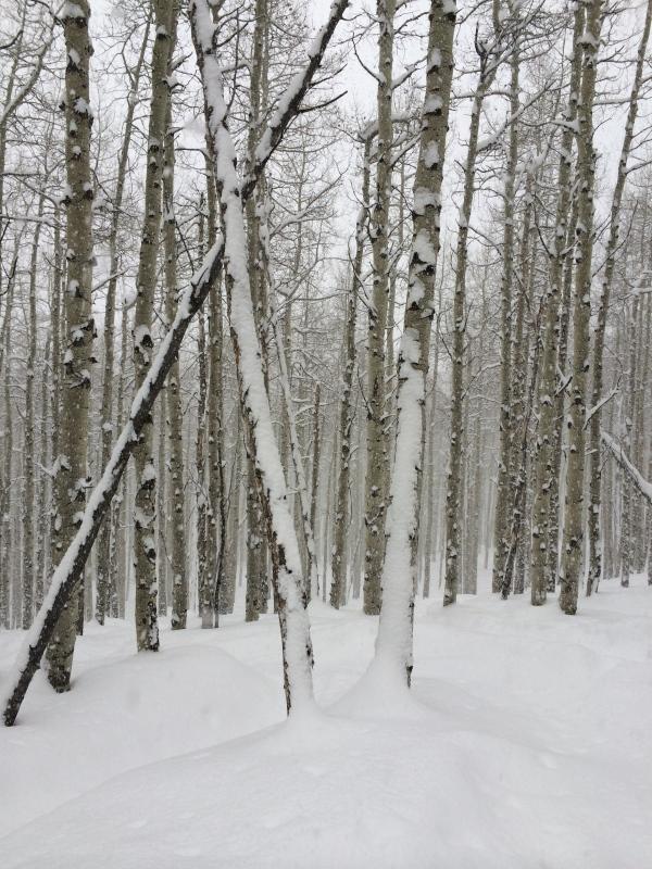 Beaver Creek tree skiing