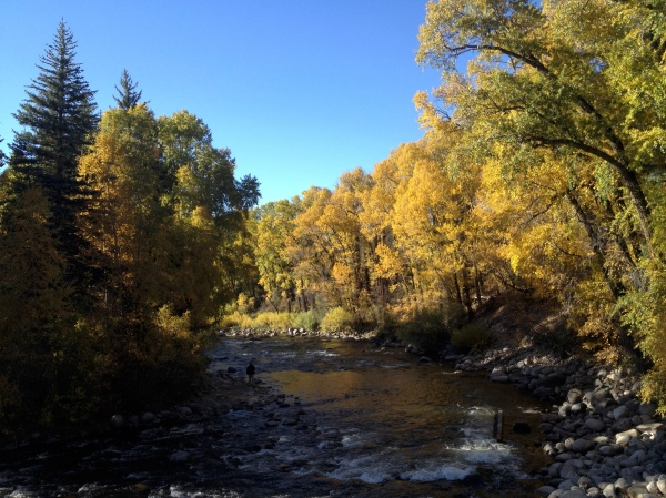 Yellow Aspens in Edwards