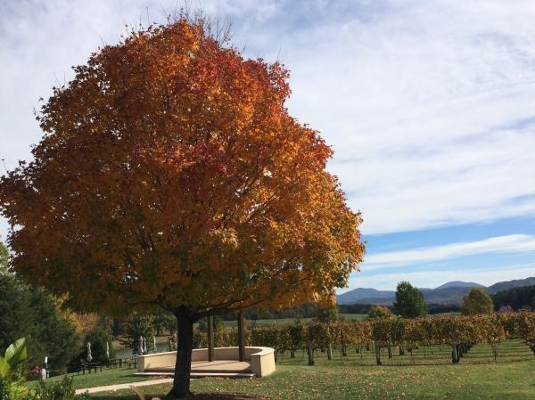 Fall Wine Tasting Virginia
