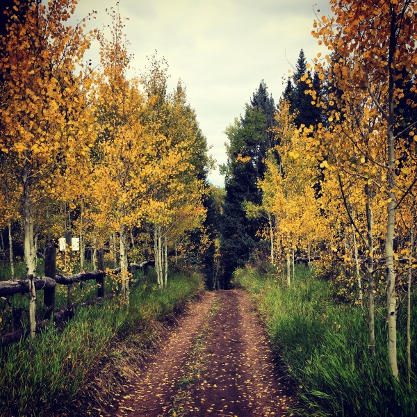 Vail Fall Colors